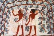 4.- Vinificación primitiva.